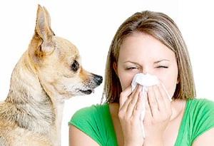 Легкая форма аллергии по симптомам похожа на простудное заболевание