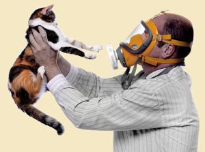 Часто бывает аллергия на кошек