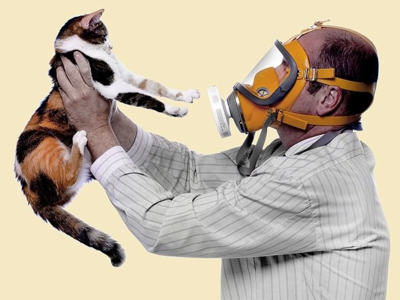 Гипоаллергенные кошки - название пород без подшерстка с фото