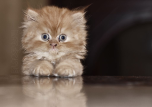 Коты очень популярные домашние питомцы