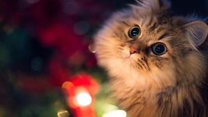 Признаки аллергической реакции на кошек