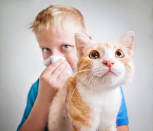 Аллергическая реакция на кошачью шерсть