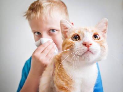 Аллергия на кошек как избавиться в домашних условиях