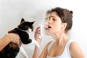 Как избавиться от аллергической реакции на кошку