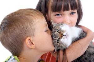 Как проявляется аллергии на кошку